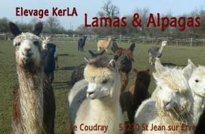 Carte de visite KerLA2013