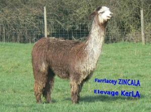 ZINCALA2