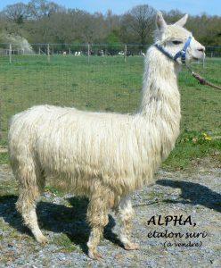 ALPHA etalon
