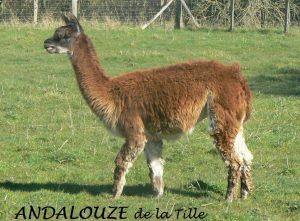 andalouze-id