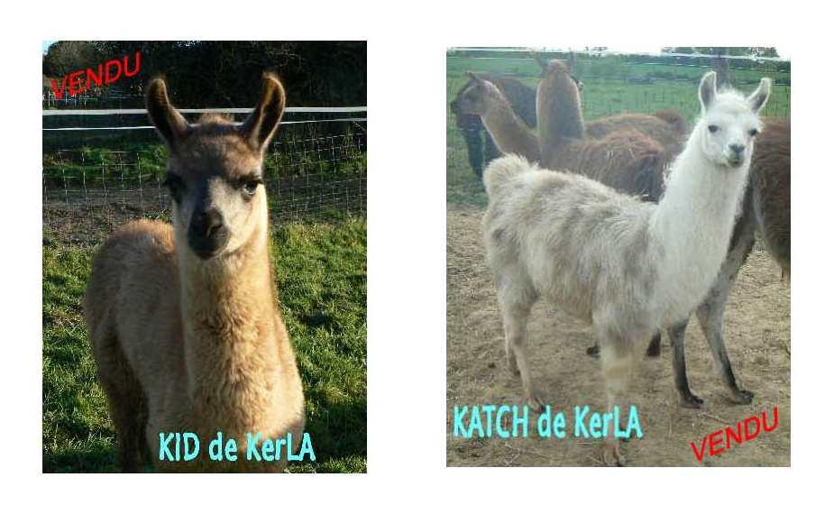 KID et KATCH vendus