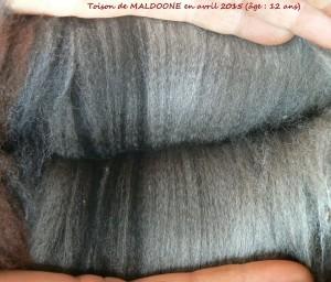 Laine MALDOONE - 2015 (Copier)