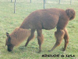 minouche-tondue