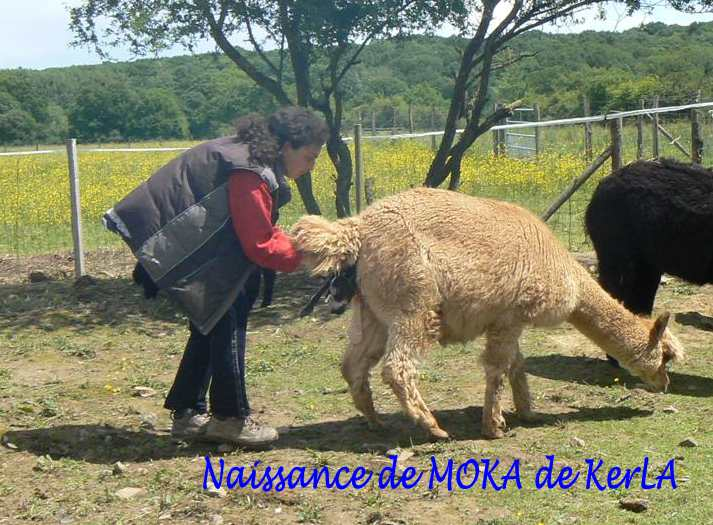 MOKA naissance 2