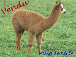 MOKA vendu