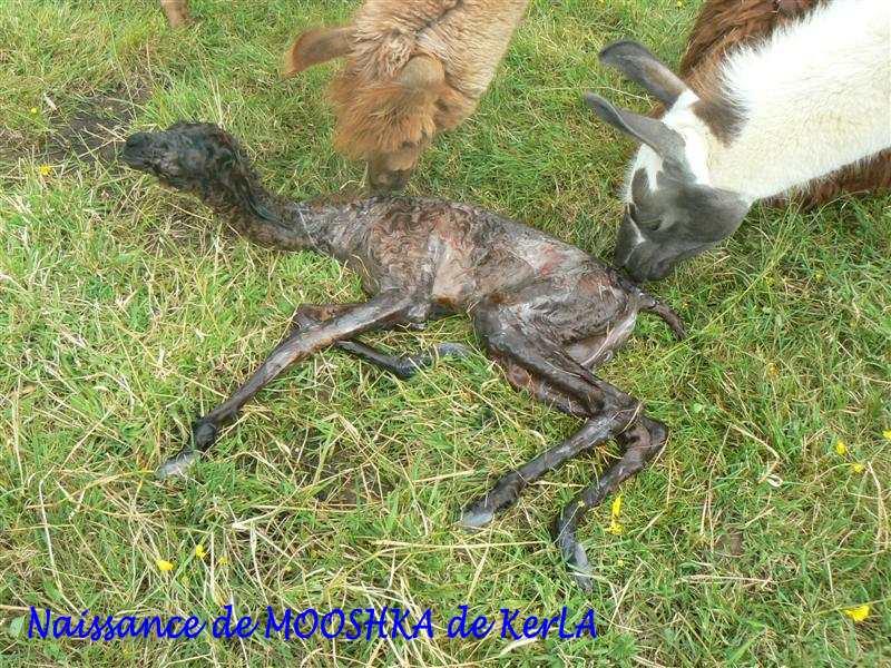MOOSHKA naissance 4