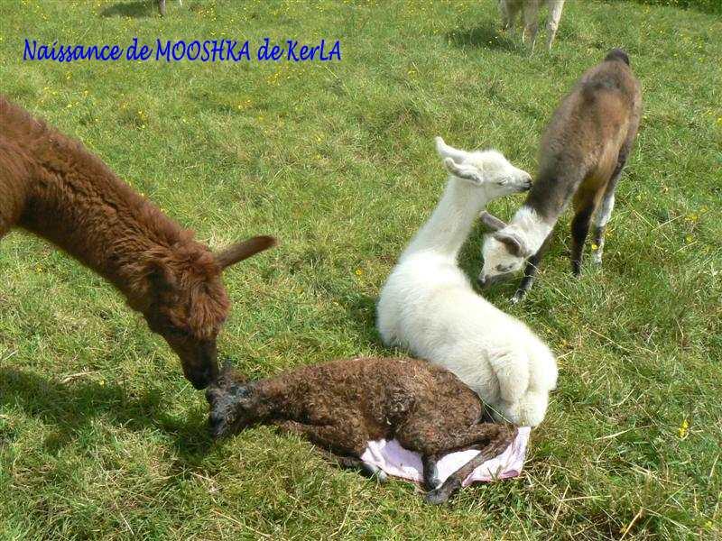 MOOSHKA naissance 6