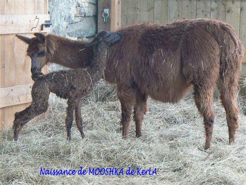 MOOSHKA naissance 7