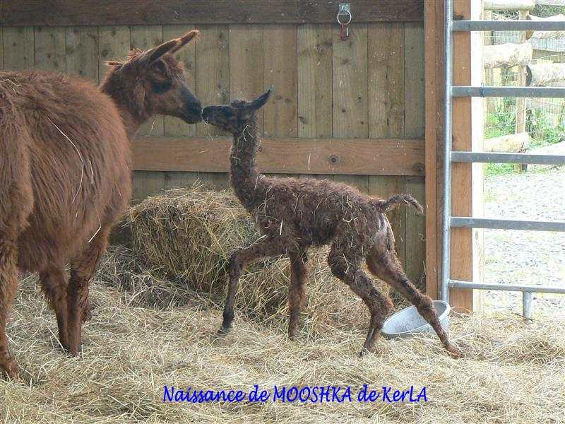 MOOSHKA naissance 8