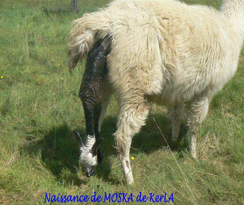 MOSKA naissance 2