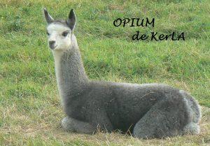 opium-vente