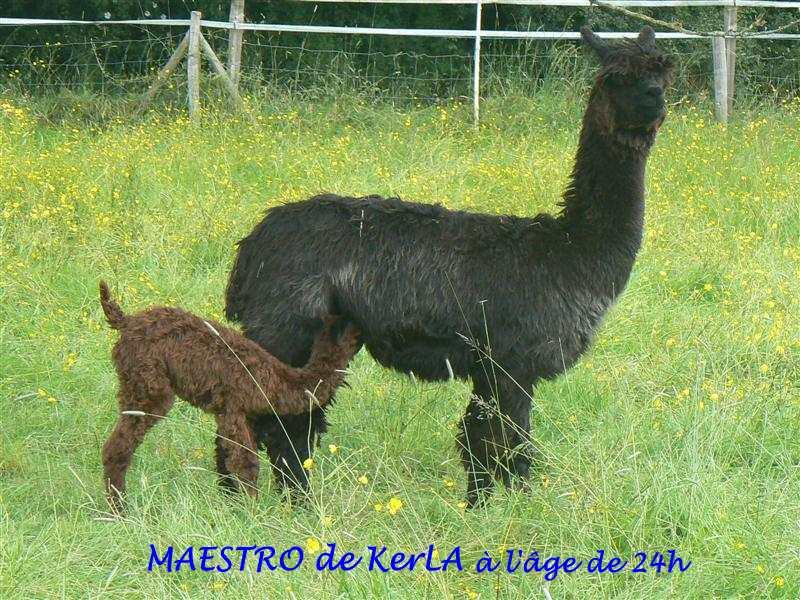 MAESTRO 24H - 1