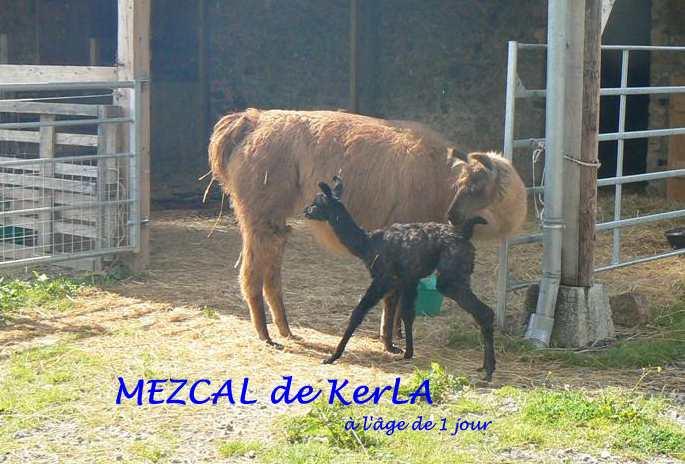 MEZCAL 1 jour - avec Lilly