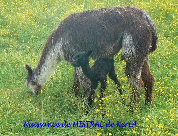 MISTRAL naissance 2