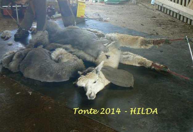Tonte 2014 - HILDA