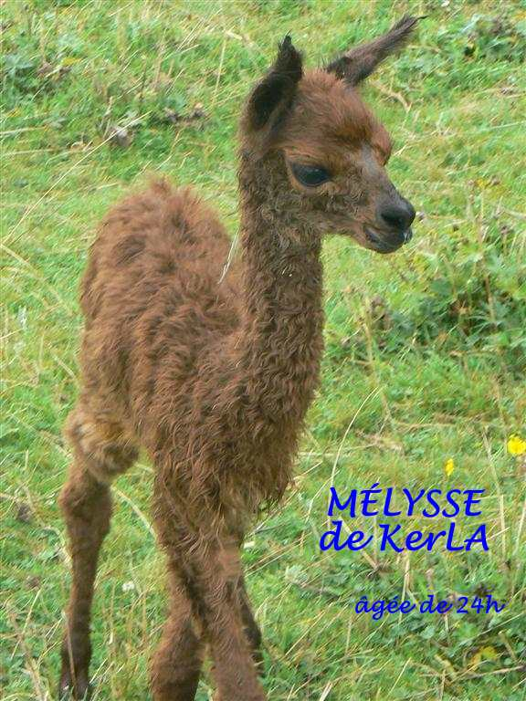 MELYSSE 1 -