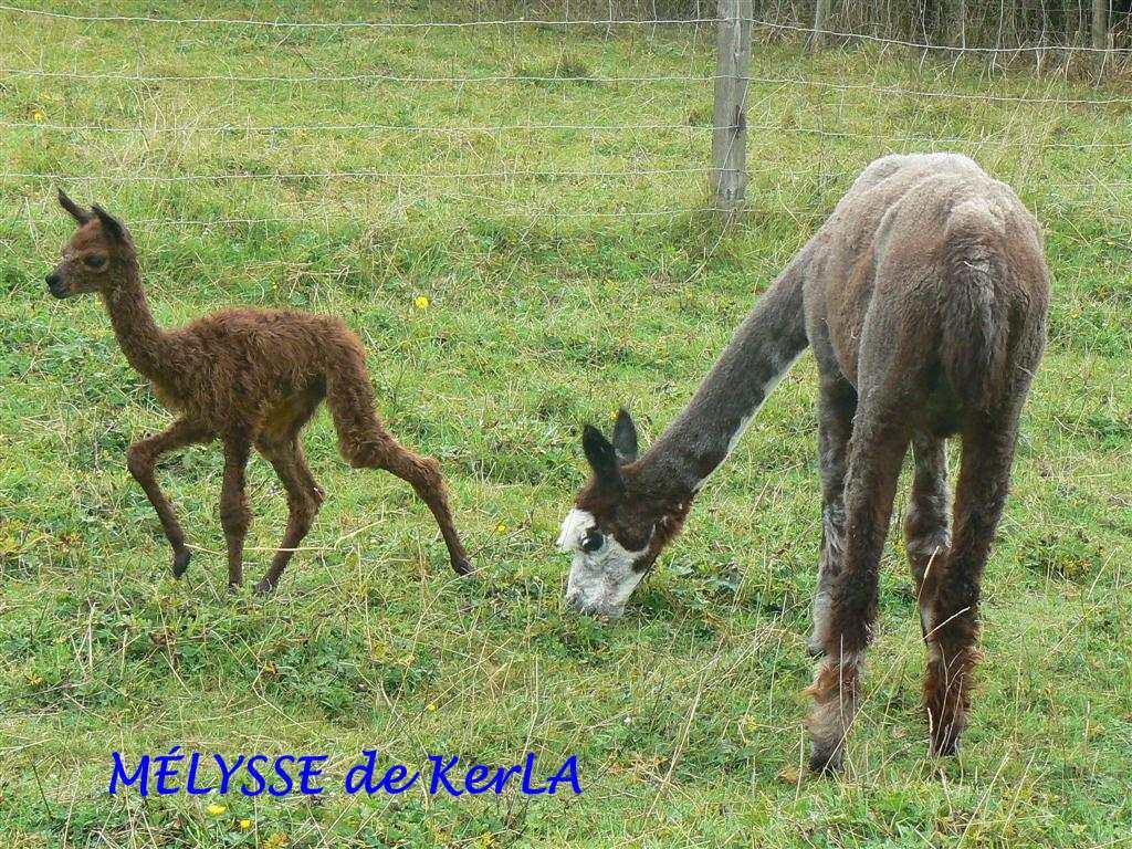 MELYSSE 3 -