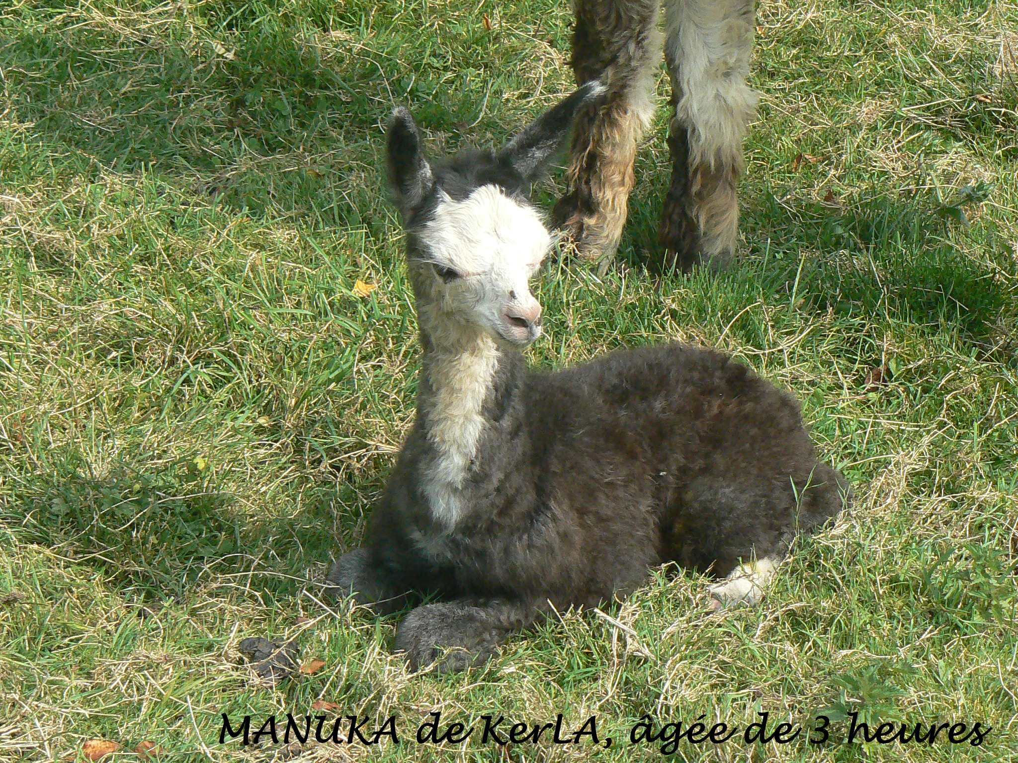 MANUKA naissance 4