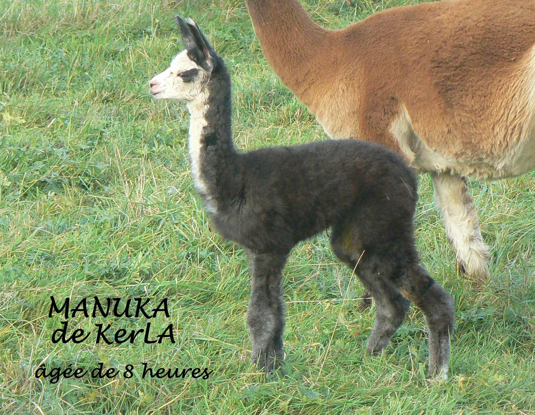 MANULA naissance 5
