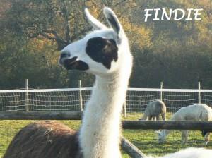 FINDIE id
