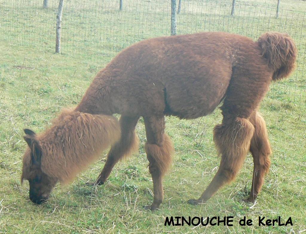 MINOUCHE tondue