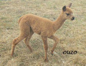 OUZO de KerLA
