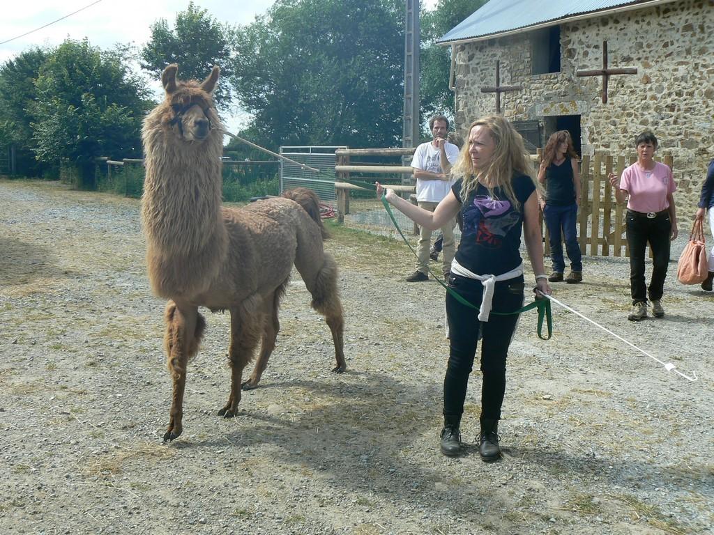 tondeurs professionnels pour lamas et alpagas