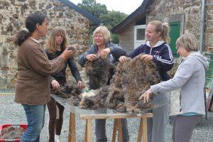 Tri de la laine